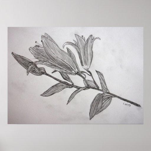 Tiger Lilies Pencil Drawing Flower Art Print   Zazzle