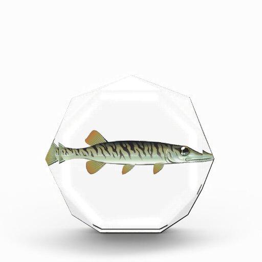 Tiny baby muskie Vector Art Fish Farm Acrylic Award | Zazzle