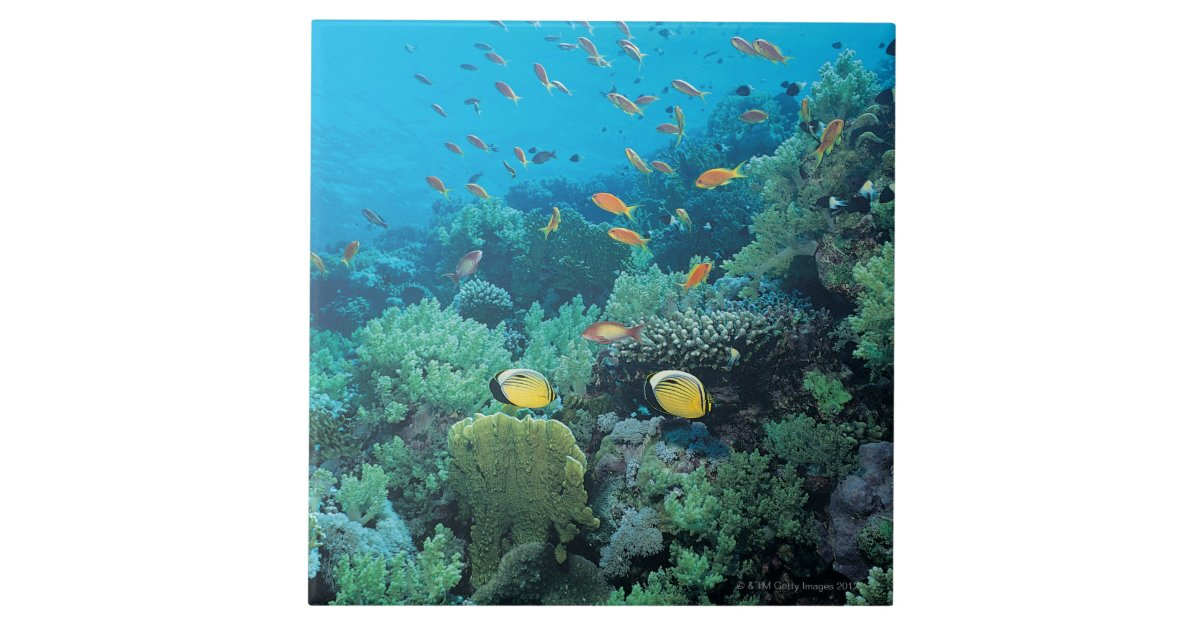Tropical Fish Swimming Over Reef Tile Zazzle