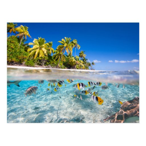 Tropical Island: Tropical Island Under And Above Water Postcard