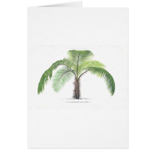 tropical palm tree collection - drawing VI Card   Zazzle  Hawaiian Palm Tree Drawings