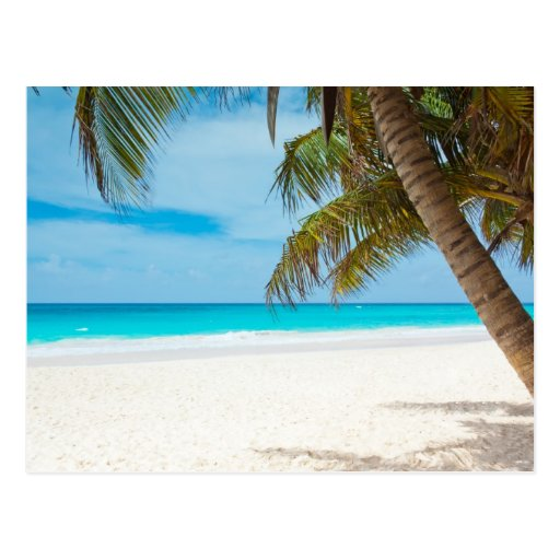 Paradise Beach: Tropical Paradise Beach Postcard