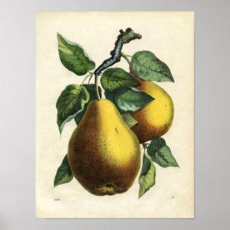 Vintage Pears 8