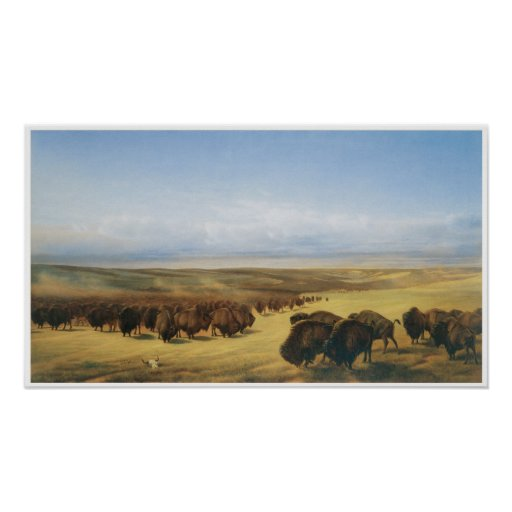 vintage buffalo herd poster zazzle. Black Bedroom Furniture Sets. Home Design Ideas