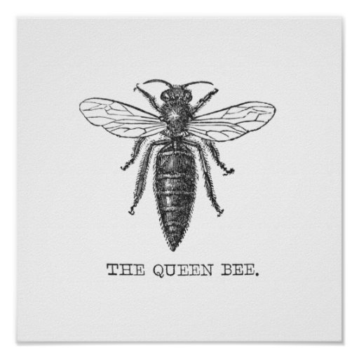 Queen Bee Scientific Illustration | www.imgkid.com - The ...