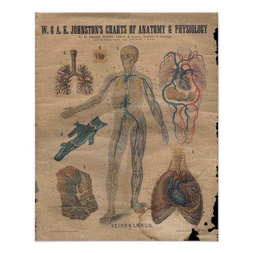 Remarkable, very vintage anatomy chart remarkable, rather