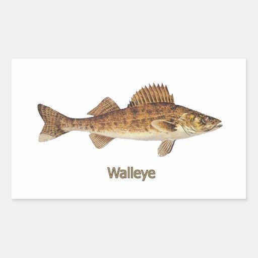 Walleye (Great Lakes) Rectangular Sticker | Zazzle
