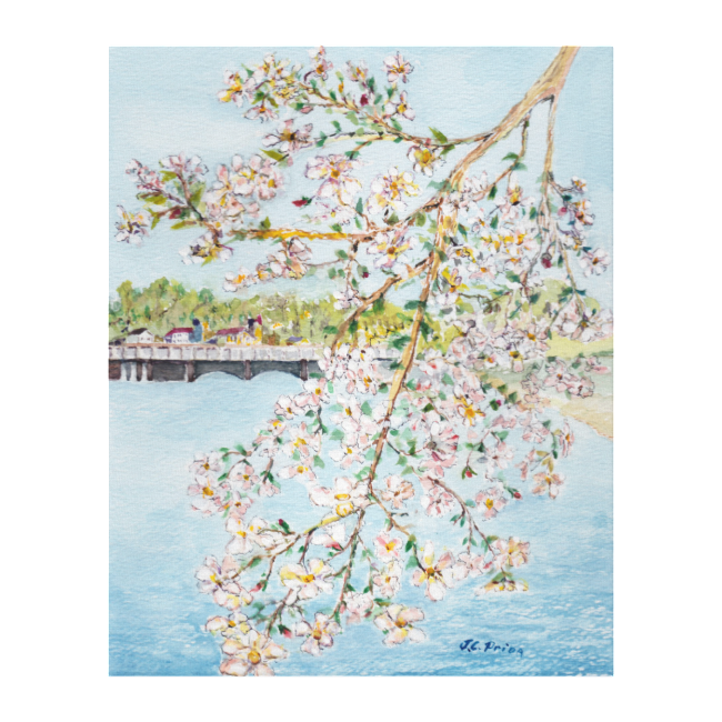 Washington DC Cherry Blossoms Watercolor Painting Canvas Prints
