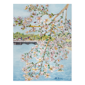 Washington DC Cherry Blossoms Watercolor Painting Postcard