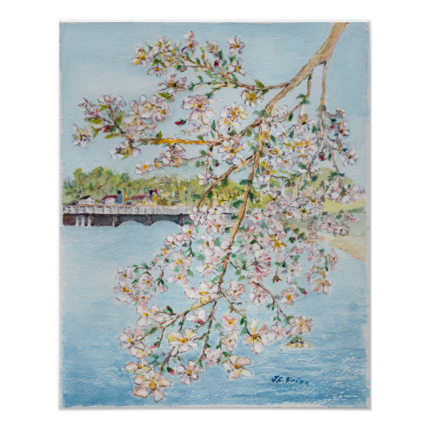 Washington DC Cherry Blossoms Watercolor Painting Poster