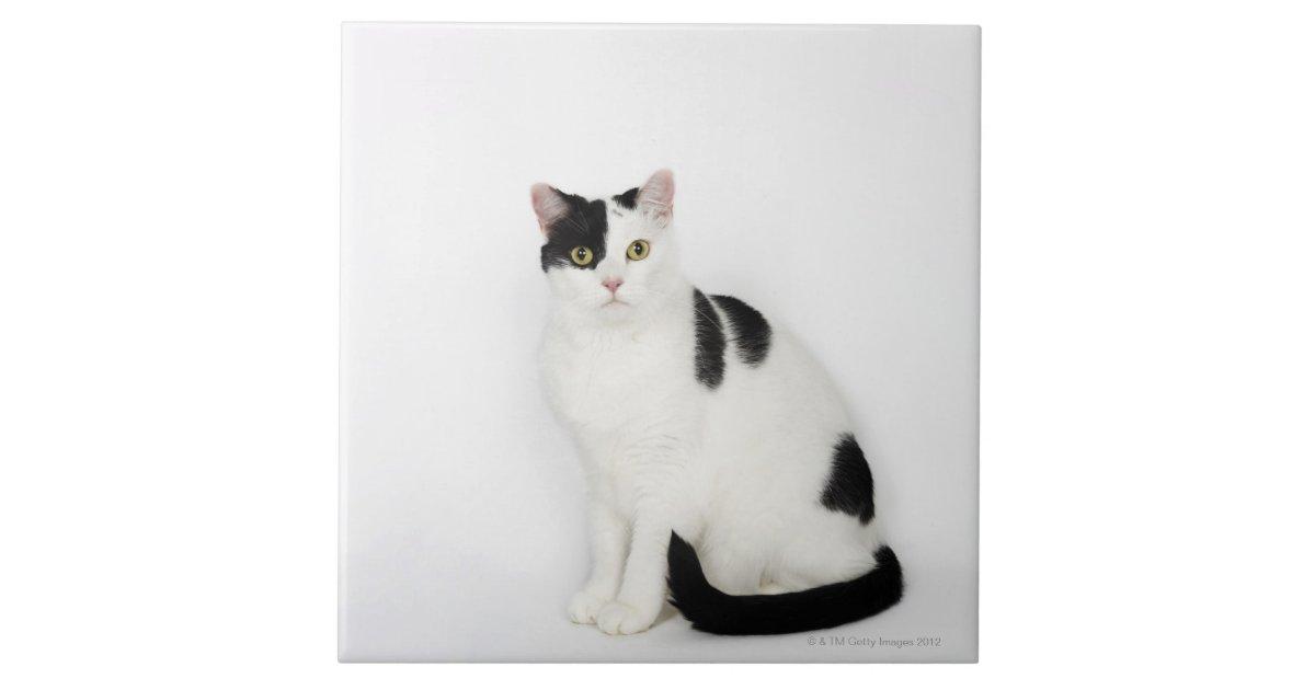 White Cat With Black Spots Tile Zazzle