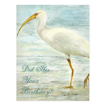 White Ibis Beach Postcard Did Ibis Your Birthday?