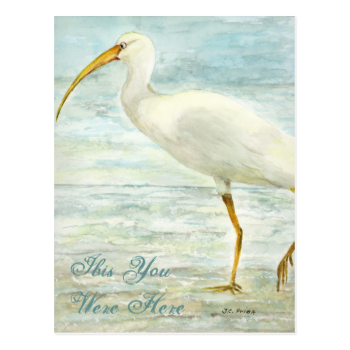 White Ibis Beach Postcard