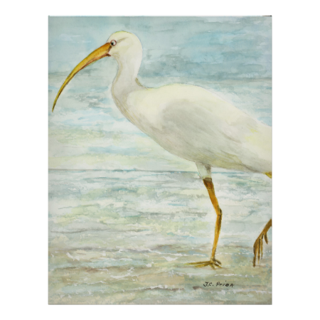 White Ibis on the Shore Posters