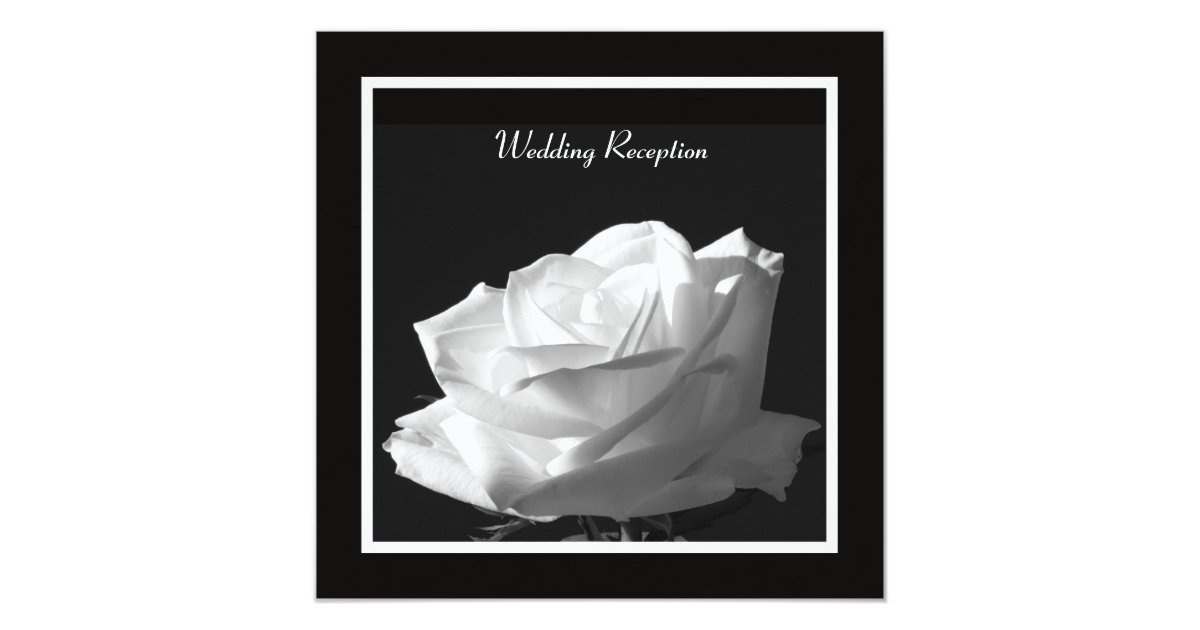 Reception Only Wedding Invitations: White Rose Wedding Reception Only Invitation