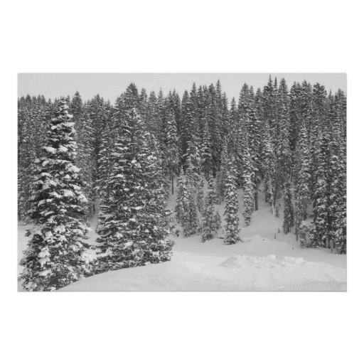 An introvert's perspective on winter. | Profane. |Winter Forest Black And White