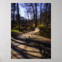 Woodland Trail And Bridge poster print / canvas print