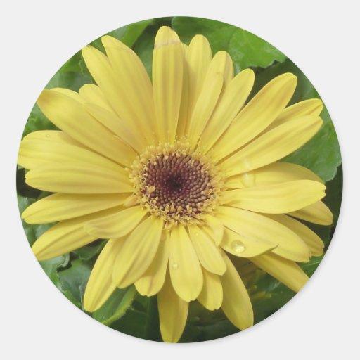 Yellow Daisy Classic Round Sticker