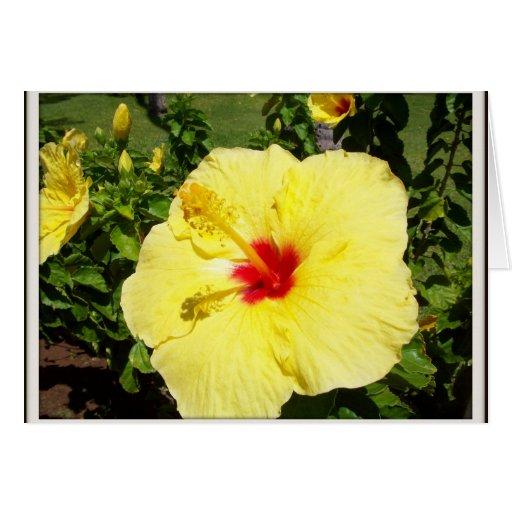 yellow flower sympathy card  zazzle