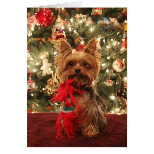 Yorkie Christmas 2 Greeting Card