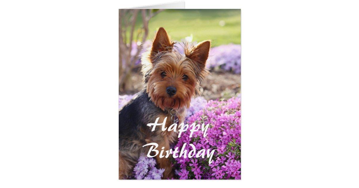 Yorkie Happy Birthday Card   Zazzle