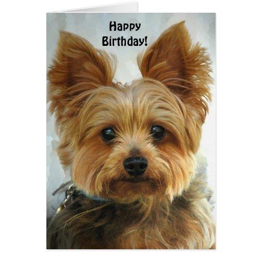 Yorkie - Happy Birthday Greeting Card