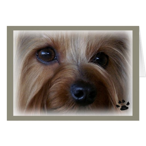 Miss You Yorkie I sure do miss you I Miss You Yorkie