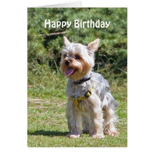 Yorkshire Terrier Dog Custom Birthday Card