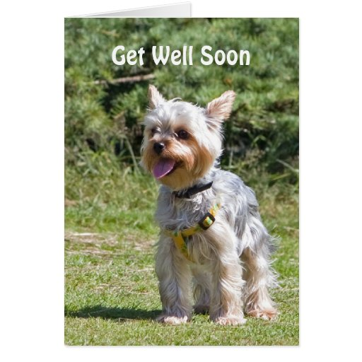Yorkshire Terrier Dog Get Well Soon Greeting Card