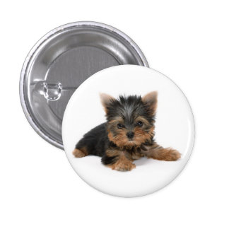 Yorkshire Terrier Clothing Accessories, Yorkshire Terrier ...